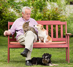 Image of Old man resting on bench and cuddling dog and cat