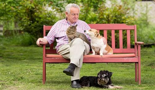 gentleman-dog-cat